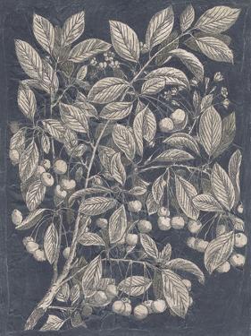 Vintage Fruit & Floral III by Megan Meagher