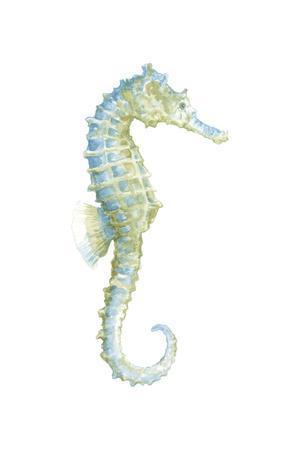 Watercolor Seahorse I