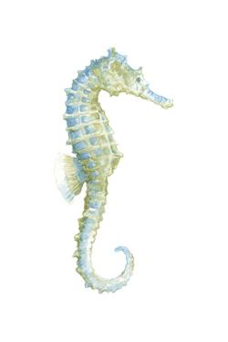 Watercolor Seahorse I by Megan Meagher