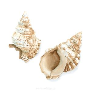 Watercolor Shells VII by Megan Meagher