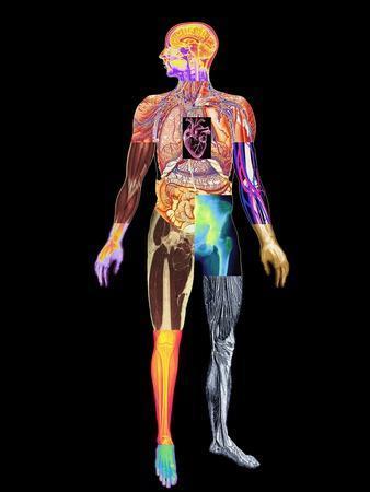 Body Imaging