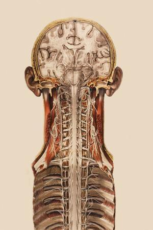 Central Nervous System Anatomy