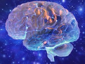 Human Brain, Computer Artwork by Mehau Kulyk