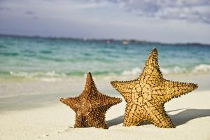 Starfish on Tropical Caribbean Beach by Mehmed Zelkovic
