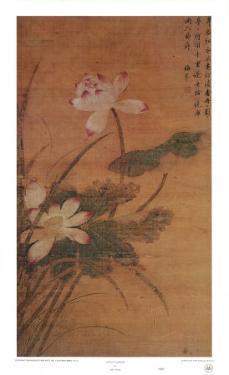 Lotus Flowers by Mei Feng