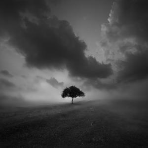 Lonely Tree by meisaguo