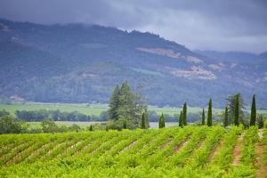 View of a Vineyard in Napa Valley, California by Mel Curtis