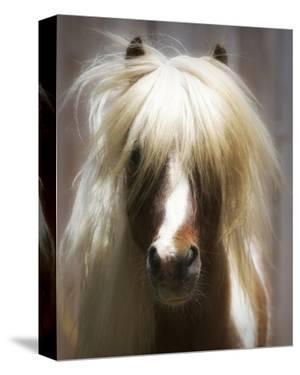 Shetland Pony by Melanie Snowhite