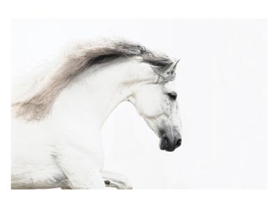 White on White by Melanie Snowhite