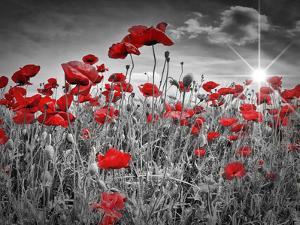 Idyllic Field Of Poppies With Sun by Melanie Viola