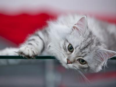 Lovely Kitten by Melanie Viola
