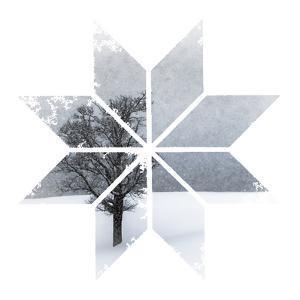 Snowflake Lonely Tree by Melanie Viola