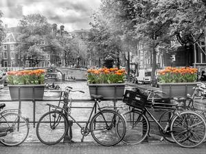 Typical Amsterdam - Panoramic View by Melanie Viola