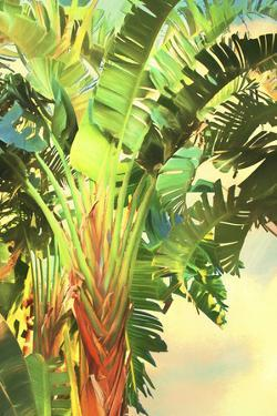 Bird of Paradise Palm I by Melinda Bradshaw