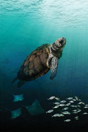 Sea Turtle Rising