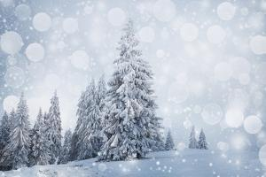 Christmas Background with Snowy Fir Trees by melis