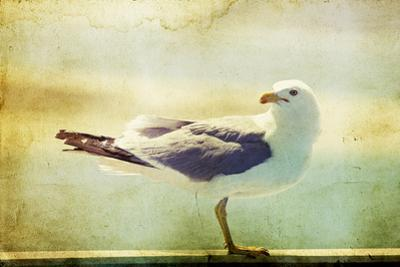 Vintage Photo Of A Seagull-Artistic Retro Styled Picture