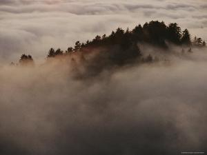 Fir Trees in the Fog by Melissa Farlow