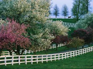 Flowering Crab Apple Trees Bloom on Manchester Farm's Grounds by Melissa Farlow