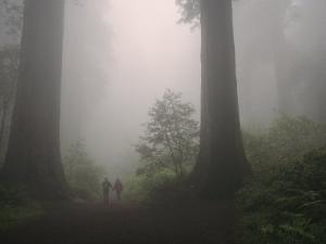 Foggy Forest View with a Couple Walking Between Giant Redwood Trees by Melissa Farlow