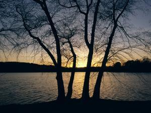 Trees Alongside Jamaica Pond Silhouetted by the Setting Sun by Melissa Farlow