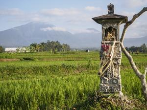 Rice paddies with shrine and Mount Batukaru, Bali, Indonesia, Southeast Asia, Asia by Melissa Kuhnell