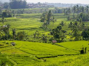 Rice terraces, Bali, Indonesia, Southeast Asia, Asia by Melissa Kuhnell