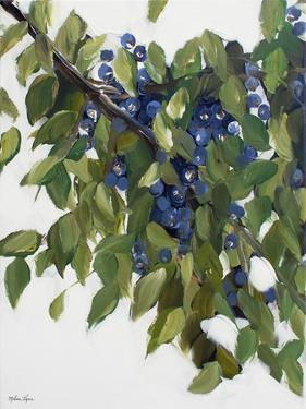 Blueberries by Melissa Lyons