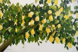 Dana's Lemon Tree by Melissa Lyons