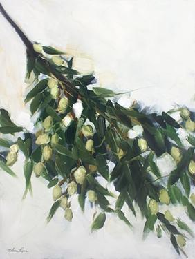 Olive Branch by Melissa Lyons