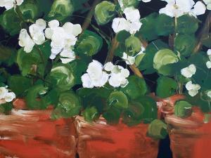 White Geraniums by Melissa Lyons