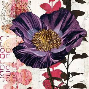 Plum Poppy Story by Melissa Pluch