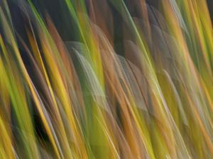 Motion Blur of Grasses Along a Canal at Lake Mattamuskeet Near Engelhard, North Carolina by Melissa Southern