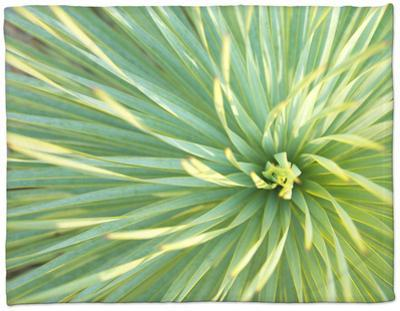 Motion Blur of Yucca Plant at Jc Raulston Arboretum in Raleigh, North Carolina by Melissa Southern