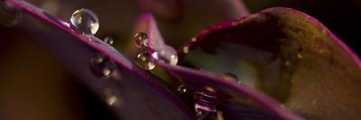 Variety of Exotic Begonia in Sarah P. Duke Gardens in Durham, North Carolina