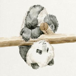 Baby Panda II by Melissa Wang