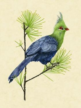 Green Turaco I by Melissa Wang