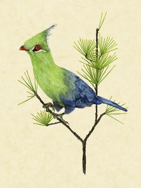 Green Turaco II by Melissa Wang