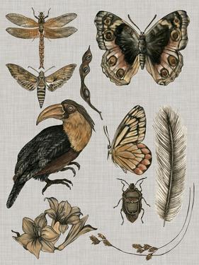 Nature Studies I by Melissa Wang