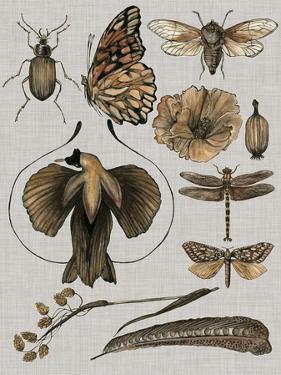 Nature Studies II by Melissa Wang