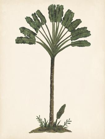 Palm Tree Study I by Melissa Wang