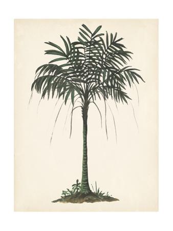 Palm Tree Study II by Melissa Wang