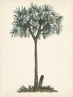 Palm Tree Study III by Melissa Wang