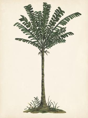 Palm Tree Study IV by Melissa Wang