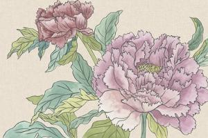 Peony Blooms I by Melissa Wang