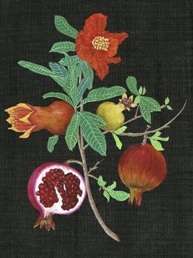 Pomegranate Study II by Melissa Wang