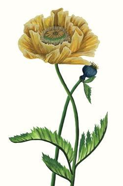 Poppy Flower I by Melissa Wang