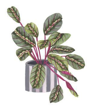 Prayer Plant I by Melissa Wang