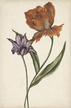 Two Tulips II by Melissa Wang