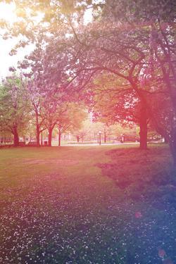 A Beautiful Tree in a Pretty Field by melking